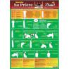 Poster Apprendre la Prière - Français/Arabe/Phonétique